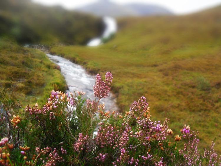 Scotland_Highlands_006