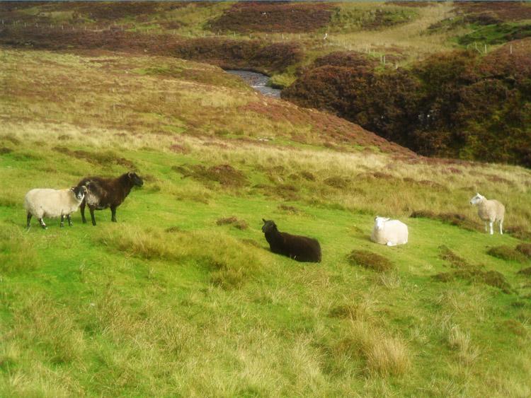 Scotland_Highlands_017