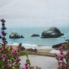 San Fran Sutro Baths Road Trip West Coast Shore Flowers  Artistic