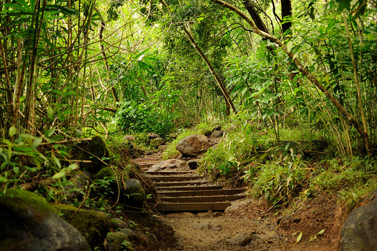 steps in the jungle manoa falls honolulu