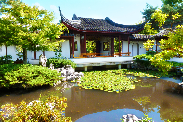 vancouver best chinese garden peaceful pond