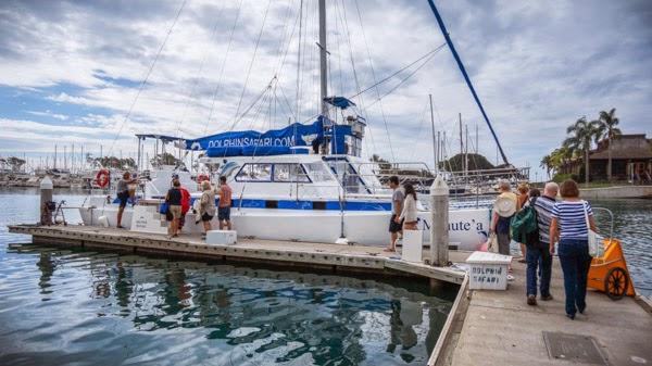 whale_watching_california_capt_daves_safari_boat