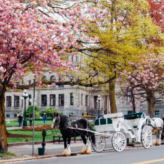 VictoriaBC_horse carriage.jpg