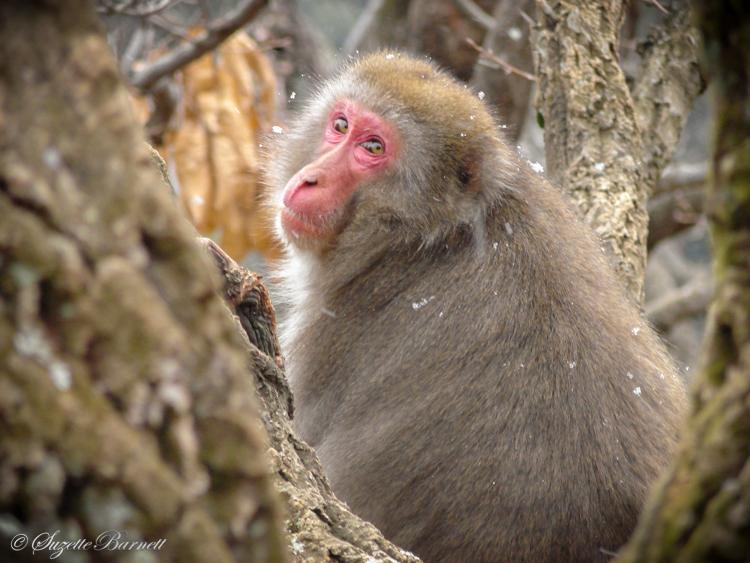 monkey nestled in tree