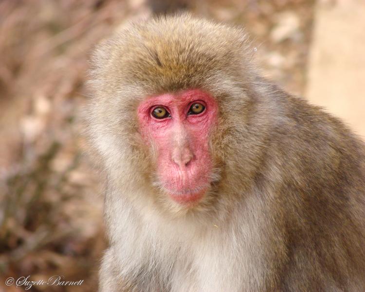 one with the monkey in arashiyama