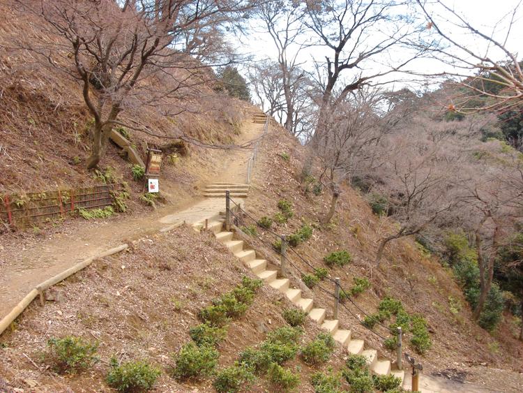 pathways up monkey mountain