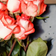 red roses and water droplets on table