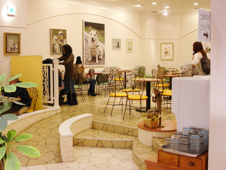 seating at chirori dog cafe japan