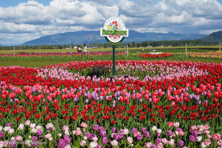 roosen garde tulip garden and sign