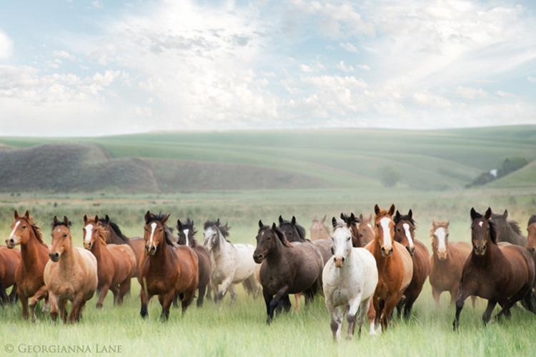 wild horses running by Georgianna Lane