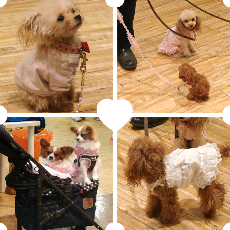 tiny dogs in the dog mall Tokyo