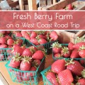 fresh berry farm on the California coast