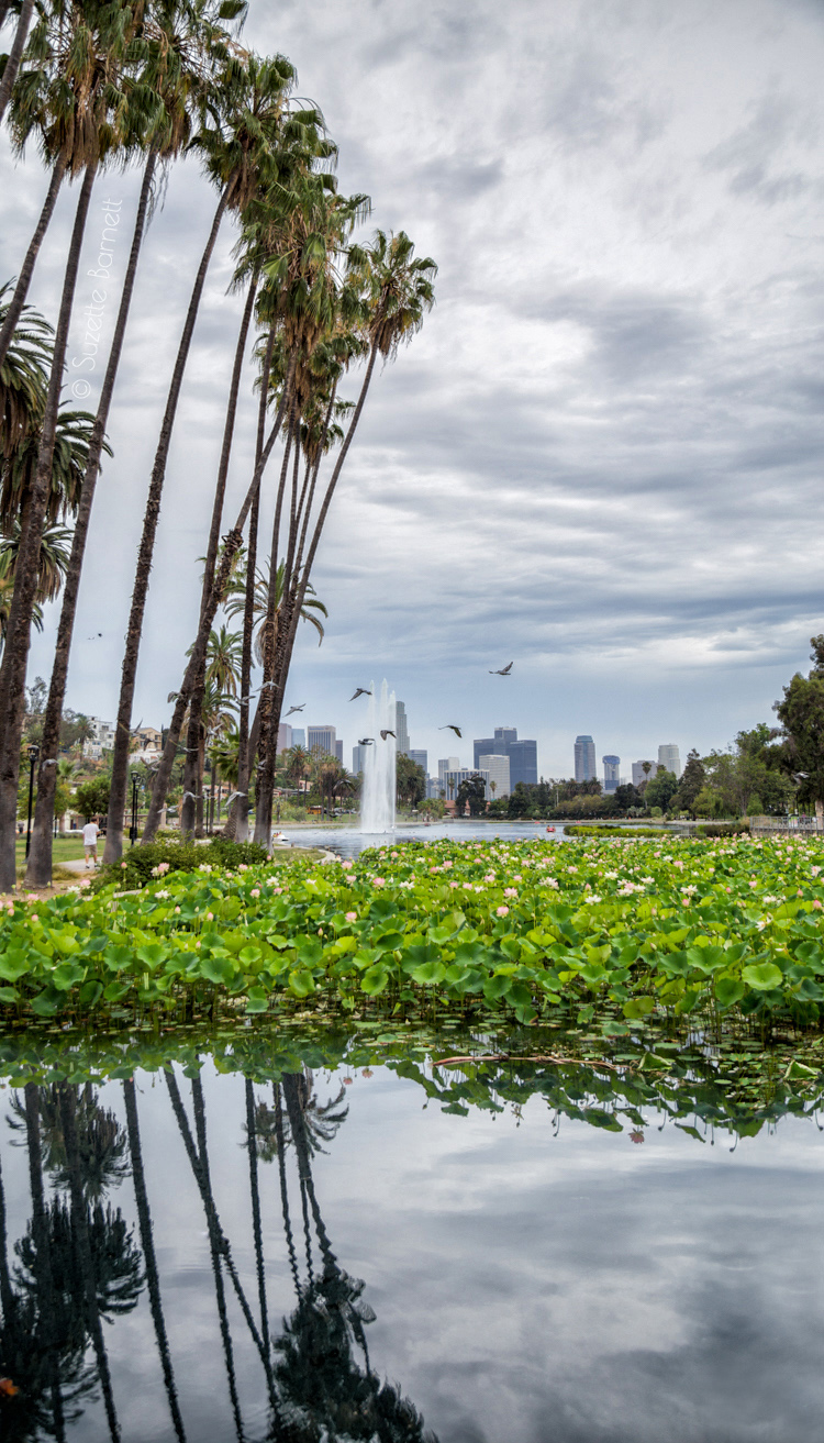 Echo Park Lake lotus flower palm trees