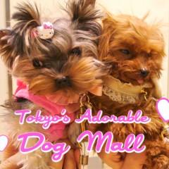 adorable dog mall tokyo