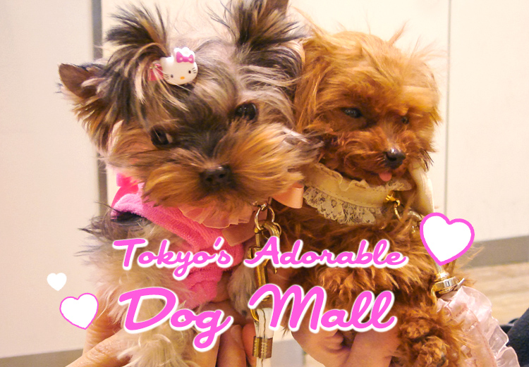 tokyo adorable dog mall_palete town