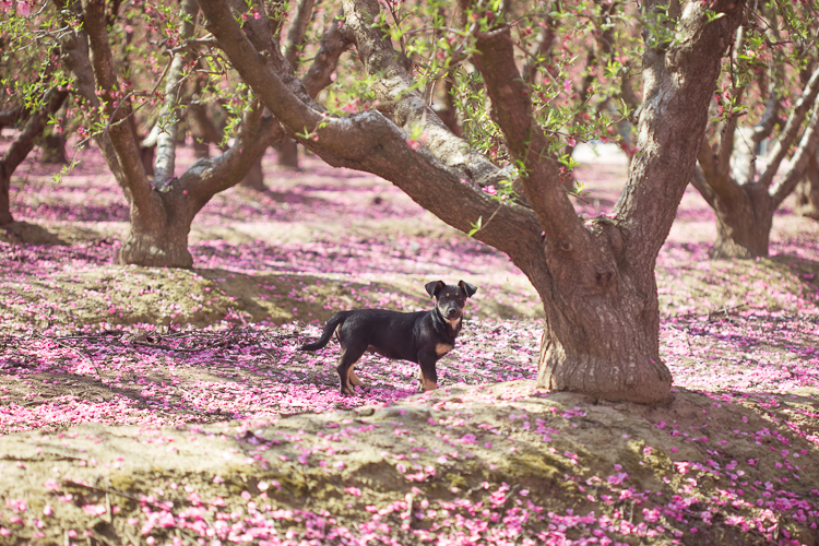 Playful Puppy in Peach Tree Orchard