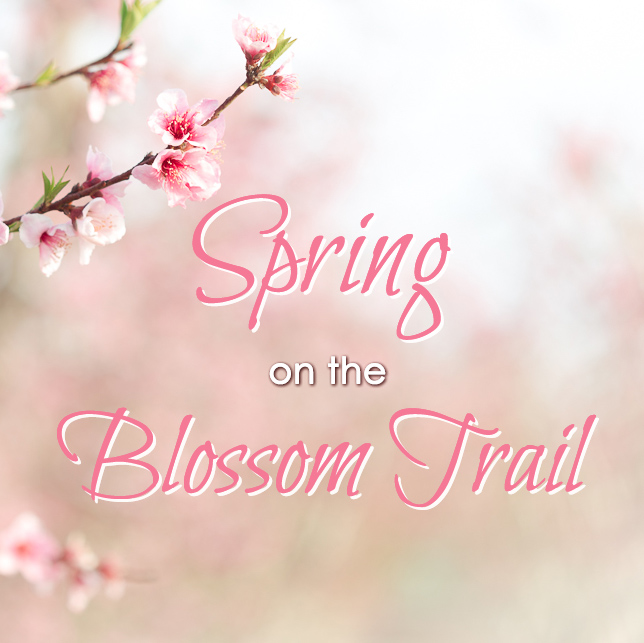 Spring On California S Blossom Trail Try Something Fun