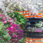 Arched bridge at the Japanese Garden