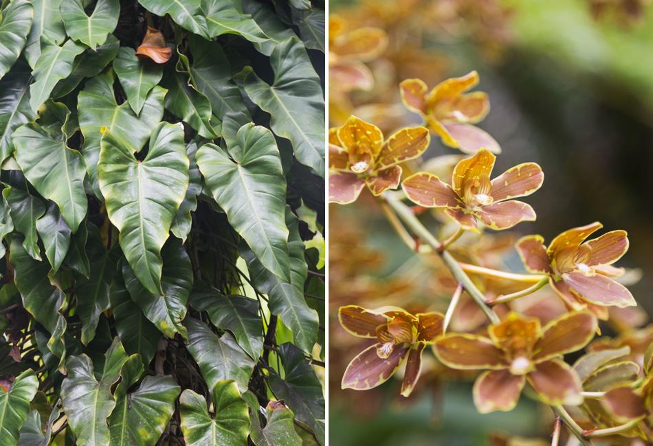 Kauai_Hindu_Monastery-orchids