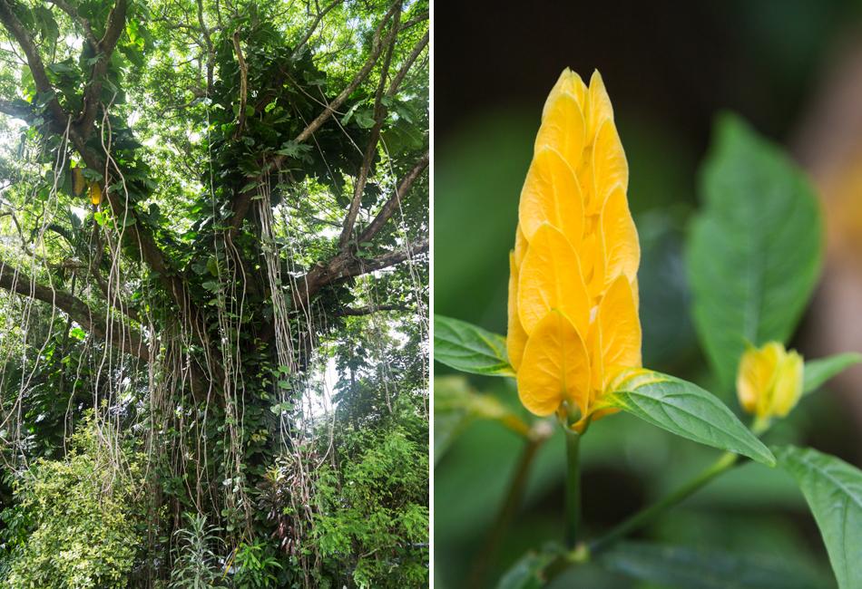 Kauai_Hindu_Monastery-vines