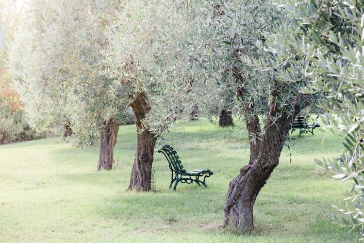 tuscany_wine_tasting_lornano-olive grove