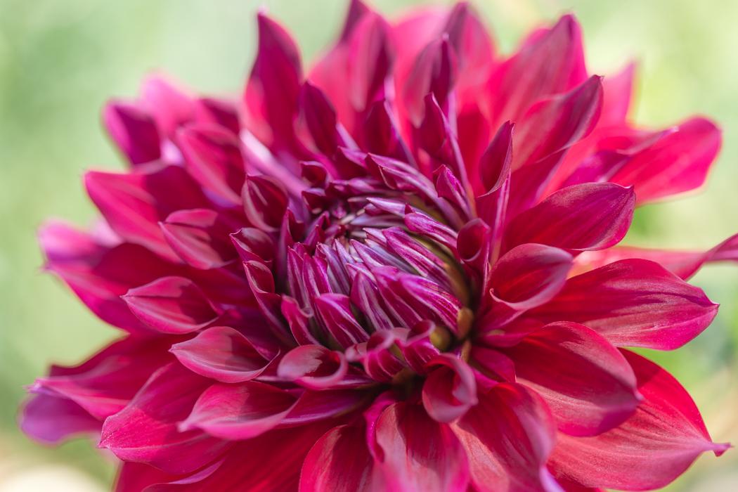 Botanic_Garden_x1050-95