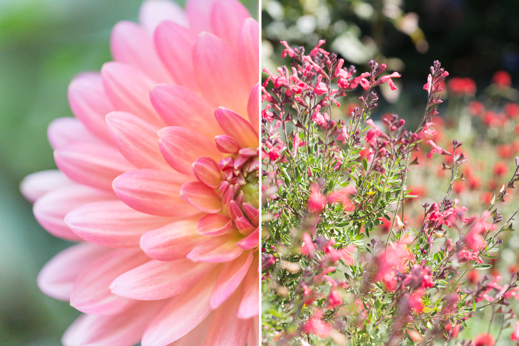 salmon dahlia and wildflowers