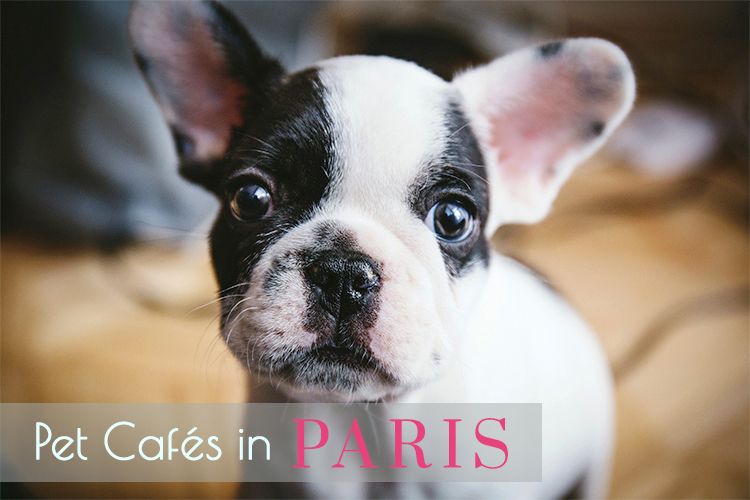 pet cafes in paris puppy