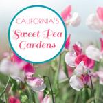 sweet pea garden