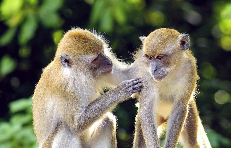 krabi_monkeys