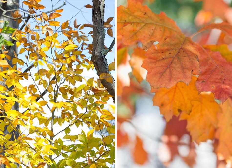Autumn leaves orange and yellow