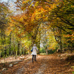 Virginia_trail_in_fall