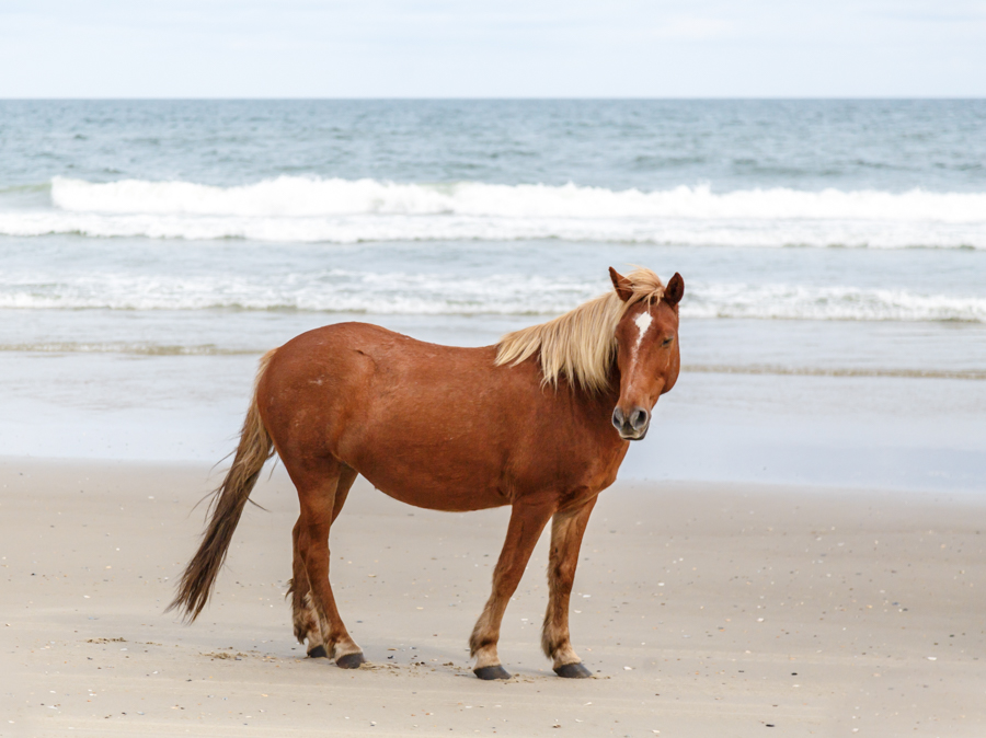 single wild horse on the beach