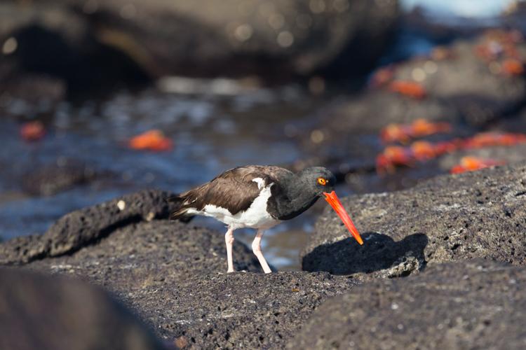 Sea birds hunting