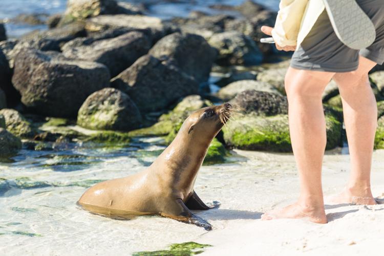 curious baby sea lion