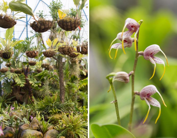 quito botanic garden