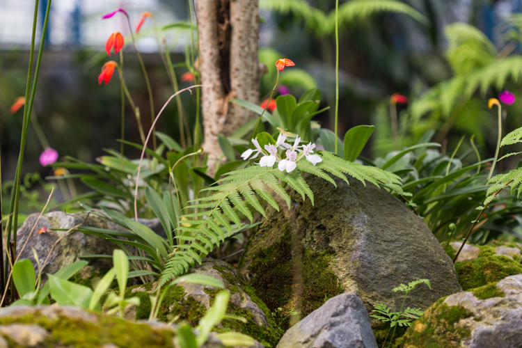 tiny orchids and ferns