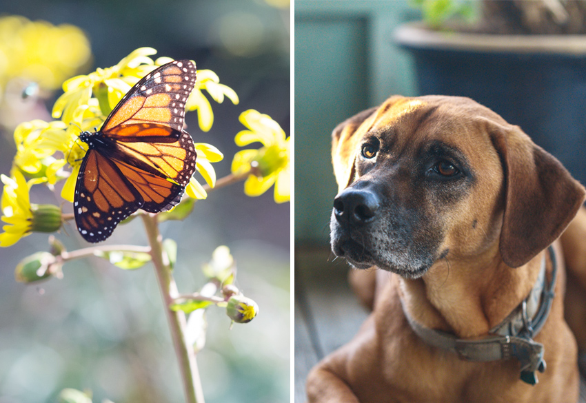 dog on porch and butterfly