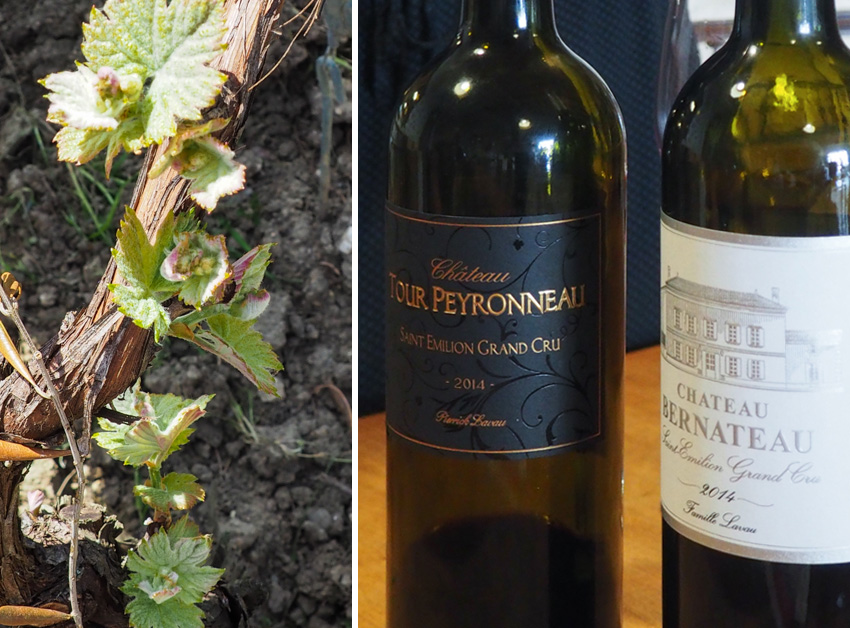 First growth of the season at Chateau Bernateau and a couple of their wines we loved.