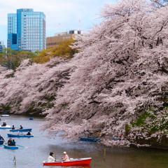 tokyo boats